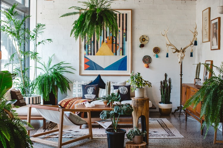 How to Arrange Plants in Your Living Room for a Plant Paradise